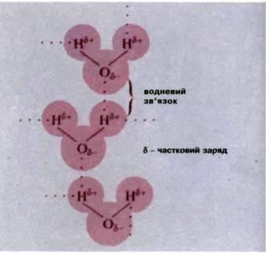 Макро та мікроелементи, значення води та водневих звязків у процесах життєдіяльності клітини