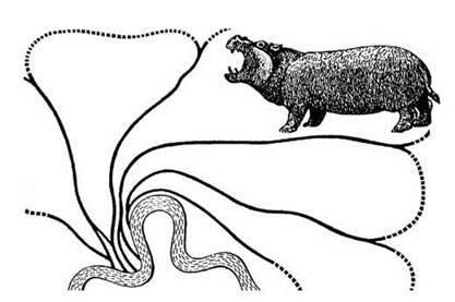 Осілі і кочові тварини