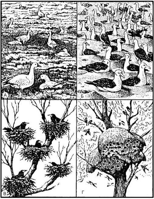 Етологічна структура популяцій тварин