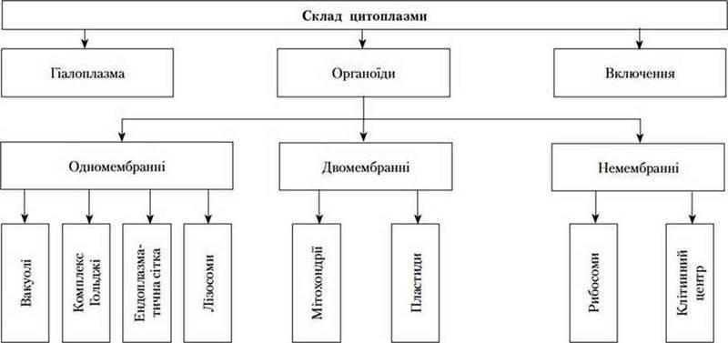 Склад цитоплазми   Цитоплазма, її компоненти