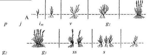 Вікова структура популяцій рослин