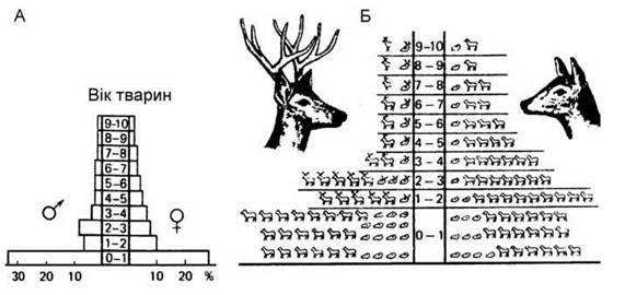 Вікова структура популяції тварин
