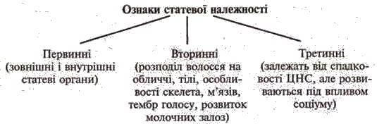Система органів розмноження людини