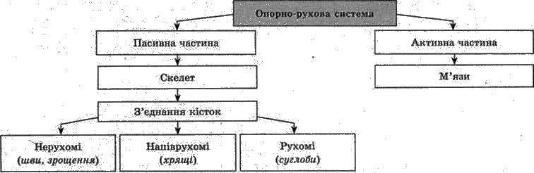 Будова і функції опорно рухової системи   ОПОРНО РУХОВА СИСТЕМА   БІОЛОГІЯ ЛЮДИНИ