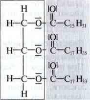 Структура молекул жиру   Жири   Естери