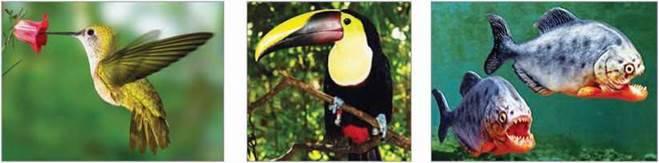 Рослинний і тваринний світ Південної Америки