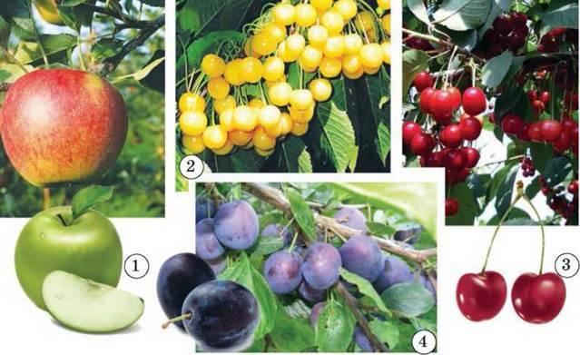 Найважливіші харчові рослини для людини